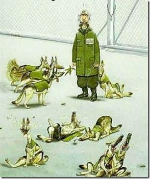 humor-perro-anti-drogas